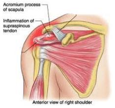acromium process of scapula