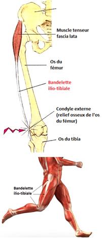 tibia, Physiothérapie, clinique de physiothérapie à Montréal, élongation du muscle, claquage, élongation musculaire du quadriceps, guérir blessure musculaire,
